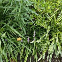 草花/草花を楽しむ暮らし/植物 道端で見つけた草花 綺麗だなー。