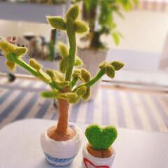 枯れない観葉植物/ツンツン/コツコツ/羊毛フェルト/ラブラブハート/パキラ/... ~~~ヾ(^∇^)おはよー♪さんです 枯…(1枚目)