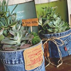 多肉植物/グリーン/デニムリメイク/雑貨/DIY/インテリア/... グリーンもデニムで可愛いく❤︎