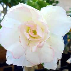 熱中症/ガーデン/Flower 🐠🌴🍹summer🍹🌴🐠٩(*´︶`*)…