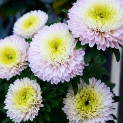 ガーデン/Flower 🌴☀️SUMMER🍧🌴  🌼*・ポンポン…