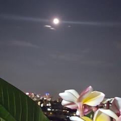 満月 🍉🌴🌺🐠  🍃今日の満月🌕美しい〜〜〜で…