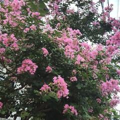 ガーデン/Flower 🌞🌴🌺🐠🍉🍌          🌸 🌸サ…