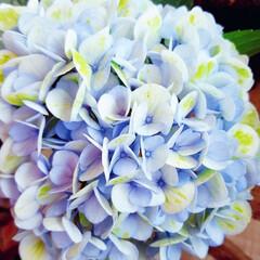 Flower/熱中症 🌴☀️SUMMER🍧🌴٩(*´︶`*)۶…