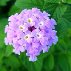 ガーデン/Flower 🌺🌴🏖🌴🌈🌻٩(*´︶`*)۶おはよ〜♬…