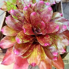 Flower/ガーデン 🌴🌺🍧SUMMER🍧🌺🌴  直径40セン…