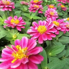 Flower/ガーデン 🌴🌺⛱🌼🍂🍁🌾٩(*´︶`*)۶おはよ〜…