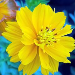 Flower/アレンジ 😎🍹🌴summer😎🍹🌴٩(*´︶`*)…