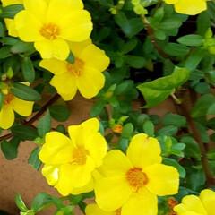 ガーデン/Flower 🌴🌺⛱🌼🍂🍁🌾  💛駅前の植え込みの❀✿…