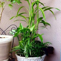 観葉植物/玄関のディスプレイ 🌴🌺⛱🌼🍂🍁🌾  日曜日に💓アレンジした…