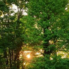 風景/夕日 🌞🌴🌺🐠🍉🍌🐭  🌲今日の夕日🌇🌅🌲