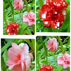 ガーデン/Flower 🌴🌺⛱🌼🍂🍁🌾こんばんは(*^▽^*)ノ…(1枚目)