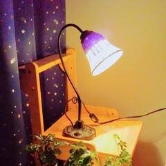 シュガーパイン/コーヒーの木/インテリア/グリーン/子供部屋/雑貨/... 観葉植物がピアノ型ライトで照らされて暖か…(1枚目)