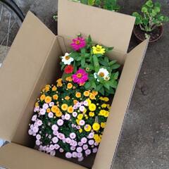 寄せ植え 秋のお花を買いました。