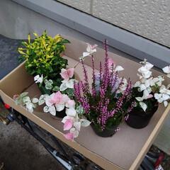寄せ植え 秋のお花を買いました。(2枚目)