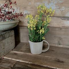 おうち時間を楽しむ/菜の花/ナチュラル/暮らし/おうち時間/テイスト/... 菜の花を飾りました。  切りっぱなしをば…(1枚目)