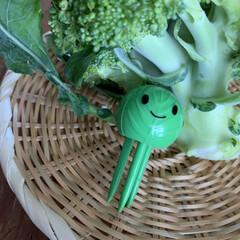 野菜の鮮度を保つ ベジシャキちゃん 2個組 93460 コジット | コジット(その他キッチンツール)を使ったクチコミ「ベジシャキちゃんで、お野菜長持ち❗️  …」(2枚目)