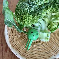 野菜の鮮度を保つ ベジシャキちゃん 2個組 93460 コジット | コジット(その他キッチンツール)を使ったクチコミ「ベジシャキちゃんで、お野菜長持ち❗️  …」(1枚目)