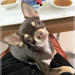 犬ペット (1枚目)
