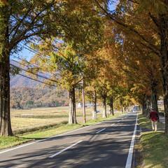 「Gotoトラベル 福井県三方五湖から滋賀…」(5枚目)