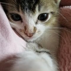 子猫 初めまして。 ニャンスです。😸
