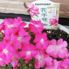 「🌸新しいお花達🌸  いろんな可愛い~お花…」(2枚目)