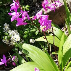 「🌸庭のお花達🌸  やっと、お休みだ~😆💕…」(2枚目)