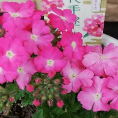「🌸新しいお花達🌸  いろんな可愛い~お花…」(1枚目)