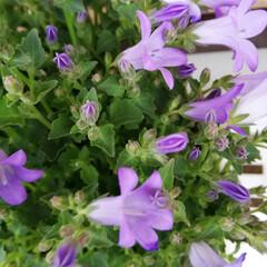 「🌸新しいお花達🌸  いろんな可愛い~お花…」(3枚目)