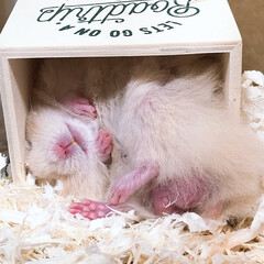 寝顔/ハムスター赤ちゃん/ハムスター/フォロー大歓迎/ペット/ペット仲間募集/... すごい体勢で寝ます😂