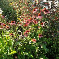 YouTubeチャネルあります。/綺麗/植物のある暮らし/お花のある生活/お花のある暮らし/お庭/...