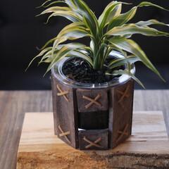 カフェ板/定規/観葉植物のある暮らし/すのこリメイク/ローテーブル/スマホスピーカー/... 最近の簡単DIy✨を載せておきます。 暇…(9枚目)
