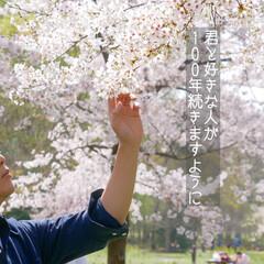 散歩/桜/花 みんなの我慢が  いつか実を結び  果て…(1枚目)