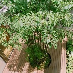 中庭/シンボルツリー 中庭を設けることで、どの部屋にも光と風が…