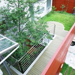 屋上庭園/シンボルツリー 周りを目隠しの塀で囲われて、プライバシー…
